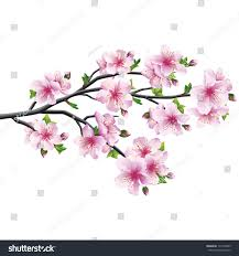 cherry blossom pink violet japanese tree stock vector 172142843