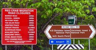christmas crab migration closes roads christmas crabs pinterest
