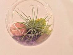coral reef glass globe hanging terrarium kit with tillandsia air