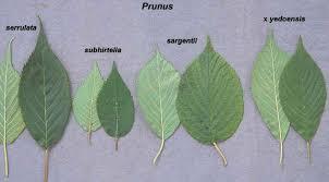identification identifying a tree gardening landscaping