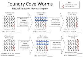 evolution and natural selection worksheets worksheets