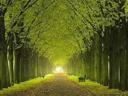 beautiful tree photography dat nature