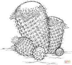 mammillaria wildii cactus coloring page free printable coloring