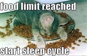 Food Meme - food limit reached cat meme cat planet cat planet