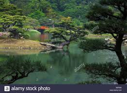 japanese garden with a pond bridge ornamental pine trees and