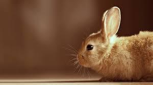 cute backgrounds for desktop cute bunny wallpapers wallpaper cave