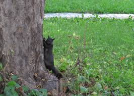How To Hunt Squirrels In Your Backyard by Black Squirrels In North Kansas City The Traveling Circus Could