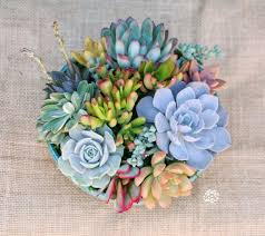 succulent arrangements succulent arrangement in turquoise container bowl large
