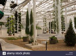hydroponics farming fruit vegetables in stock photos u0026 hydroponics