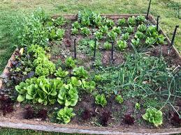 What Is Urban Gardening Medmadre Hashtag On Twitter