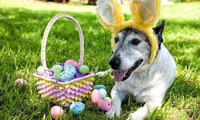 Australian Easter Decorations by Easter Kidspot