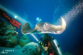 Recensioni Bravo Alimatha by Alimatha Maldives Legendary Night Dive Scuba Diving Blog