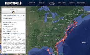 Map Of Outer Banks Nc Shark Katharine Visits Obx Again Hidden Outer Banks