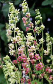 80 Best Oregon Native Images On Pinterest Oregon Native Plants