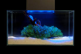 Aquarium Aquascapes Elegant Aquascaping Pet Pitch Usa