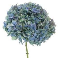 wholesale hydrangeas antique blue hydrangea mayesh wholesale florists search our
