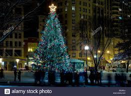 christmas tree massachusetts christmas lights decoration