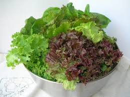 image of fresh lettuce