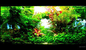 interview mit frederic fuss aquariumeinrichten com wie richte