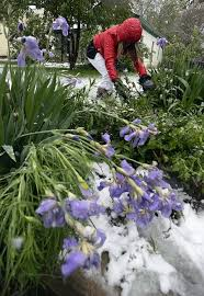 time to prep flower gardens for winter weather loveland reporter