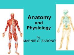 Human Anatomy And Physiology Pdf File Human Anatomy And Physiology