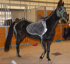 horse skeleton halloween meet our horses duke camp k