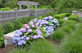 hydrangea border landscape traditional with tall grass bronze