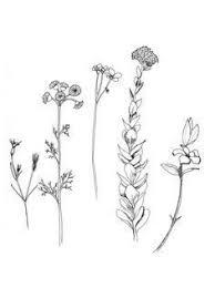 the 25 best wildflower drawing ideas on pinterest wildflower