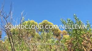 neil levin rainbow trees youtube