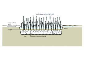 constructed wetlands global water pathogen project