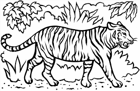 coloring pages pictures of white tigers pages cartoon best tiger