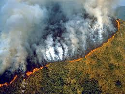 Amazon Rainforest Map Best 25 Amazon Rainforest Deforestation Ideas On Pinterest