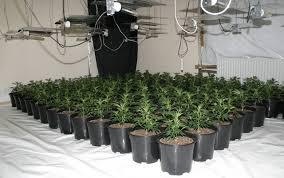 chambre de culture interieur une culture de cannabis découverte grâce à une fuite d eau dans un