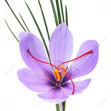 saffron images u0026 stock pictures royalty free saffron photos and