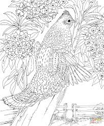 pennsylvania ruffed grouse and mountain laurel coloring page