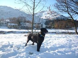 Dog Friendly Cottages Lake District by Pet Friendly Cottages In Glenridding The Lake District