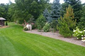 trees for the garden tips ideas for large and small outdoor