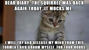 Sad Cat Memes - sad cat diary is hilarious check this out missmeowni
