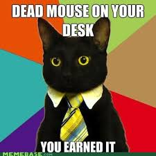 meme madness business cat moving on up memebase funny memes