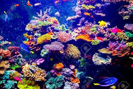 aquarium stock photos royalty free aquarium images and pictures