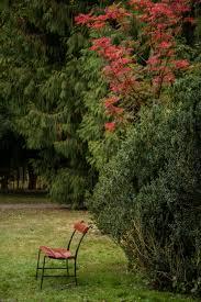 wallpaper forest garden grass park green backyard color