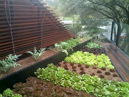 roof deck vegetable gardens eyed for urban centers u2013 philippines