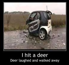 Car Wreck Meme - 64 best car mishaps images on pinterest cars funny cars and funny