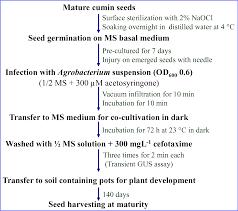 100 pdf somaclonal variation in crop improvement i pubpeer