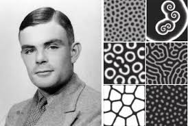 pattern formation zebra alan turing s patterns in nature and beyond wired
