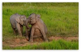 apple wallpaper elephant baby elephants playing 4k hd desktop wallpaper for 4k ultra hd tv
