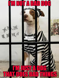 Prison Memes - dog in prison memes imgflip