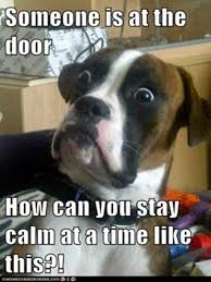 Dog Barking Meme - what i think my dog is trying to tell me every time he barks funny