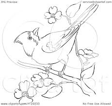 cartoon clipart of an outlined cardinal bird on a blossom branch