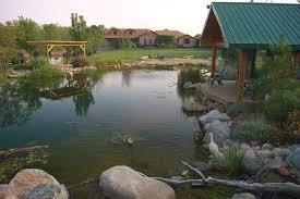 Aquascapes Pools Pond Or Pool The Fierce And Divisive Swim Pond Debate Pond
